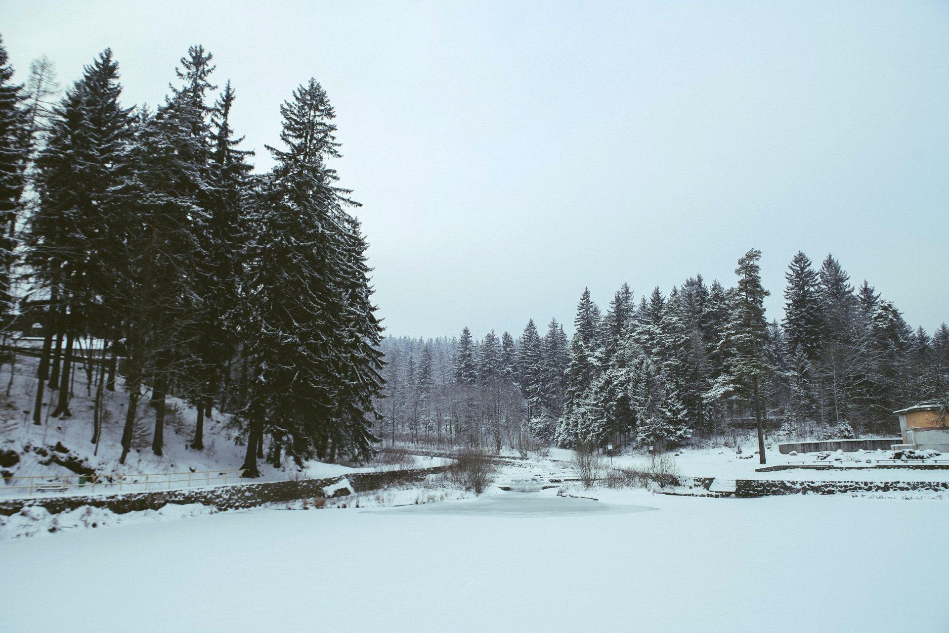 ośnieżony las
